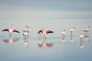 Foto op Aluminium Flamingo beautiful light on pink flamingo group