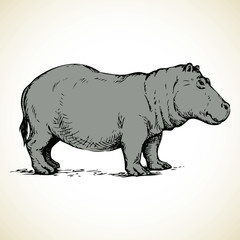 Hippo. Vector drawing