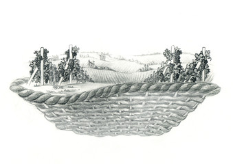 Basket with grapes. Grisaille