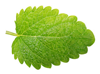 Green lemon balm leaf (Melissa officinalis) isolated on white background with clipping path