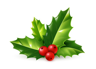 Vector realistic holly Christmas ornament. Green leaves and red berries isolated on white background