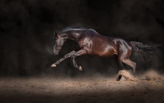 Black horse expressive jump on a black background with the dust