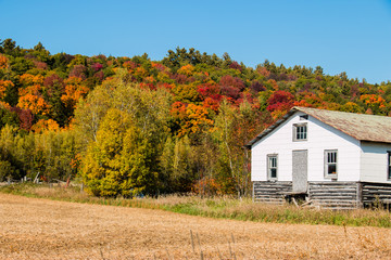 Old white house on hillside with autumn foliage