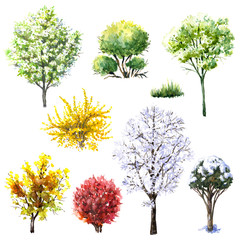 Trees and bushes  during different seasons