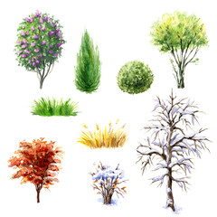 Trees and shrubs during different seasons