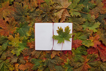 Notebook with red and yellow leaves.