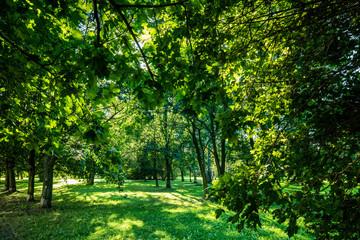 Green summer park vivid landscape