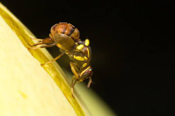 Macro small insects