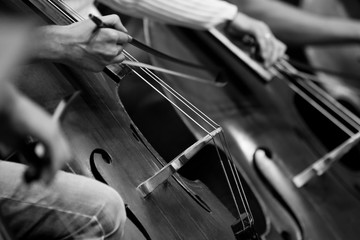 Wall Mural - Fragment double basses in the orchestra in black and white