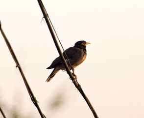 bird on the electric wire at sunset