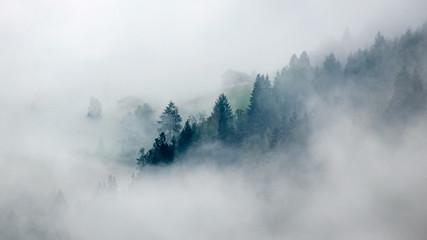 Trees in mist Fototapete