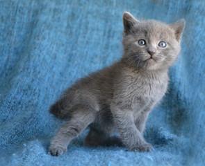 funny surprised kitten
