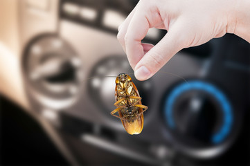 Woman's Hand holding cockroach in car background, eliminate cockroach in car