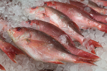 Fresh Red Snapper.