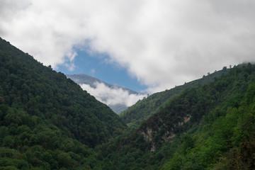 Hyrcania Forest, Mazandaran, Iran