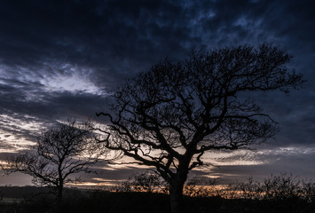 Oak tree in Silhouette at Newtown Creek, Isle of Wight, England, at Sunset