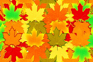 colorful fall leaves background