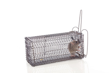 A House Mouse Trap In Mouse Trap Over White Background