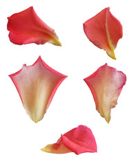 Petals with isolated white background