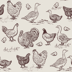 Farm birds seamless pattern. Chickens, geese, ducks, turkey