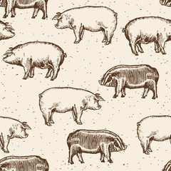Pigs seamless pattern farm pigs