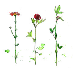 Set of watercolor and ink drawing plants