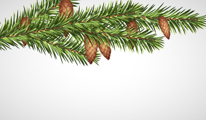 Realistic Christmas tree branch with young cones. Vector illustration.