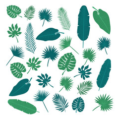Collection of tropical leaves. Nature elements for your design