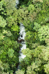 Rainforest from above in Mindo Ecuador