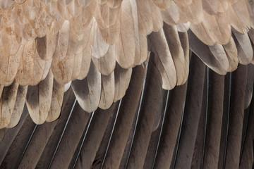 Cinereous vulture (Aegypius monachus). Plumage texture Wall mural