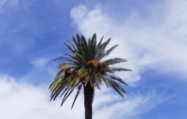 Palm tree in the blue sky