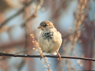 the portrait of a bird a Sparrow sitting on a tree in the Park