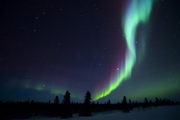Photo sur Plexiglas Pôle Nightsky lit up with aurora borealis, northern lights, wapusk national park, Manitoba, Canada.