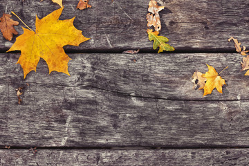 Fallen maple leaves on old wooden table. Autumn background. Vintage concept. Back to school.