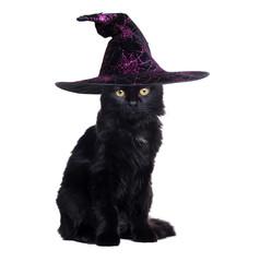 Black cat wearing witch halloween hat sitting on white backgroun
