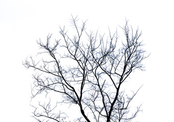 Tree with no leaves
