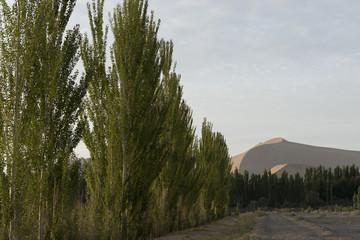 Trees with sand dunes at Mingsha Shan, Dunhuang, Jiuquan, Gansu