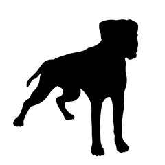 Boxer Dog realistic vector illustration black silhouette