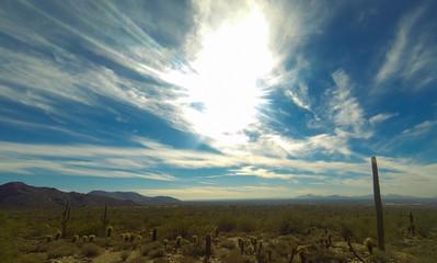 Sonora Desert Landscape