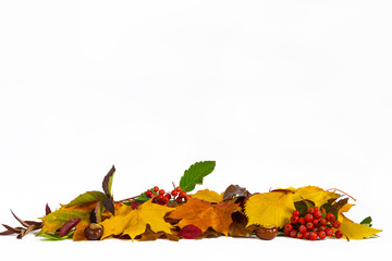 Autumn lower decoration with leaves, chestnuts and coral rowan on white background.