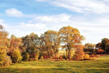 Autumn nature landscape - golden autumn trees in autumn sunny weather