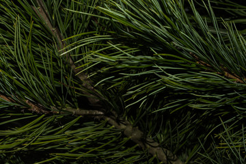 Natural background of green needles