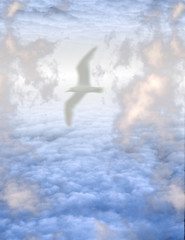Wall Mural - White Bird in Clouds