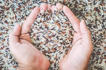 Natural Organic Rice with hand
