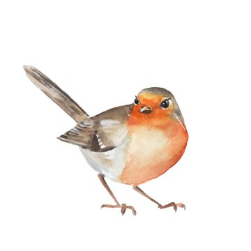 Watercolor bird Robin. Colorful illustration. Isolated on white