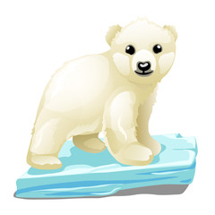 Little polar bear on ice floe, animal isolated