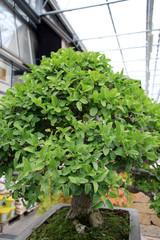 Littel tree / Tree in the form of bonsai garden