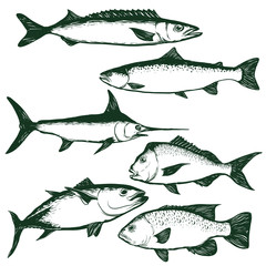 sea fishes line drawing set