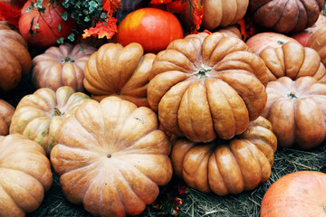 Beautiful and large pumpkins lying in a heap at the manger..
