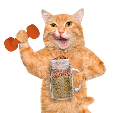 Fitness cat holding dry food in a jar mug old after a workout . Fitness and healthy lifestyle concept.